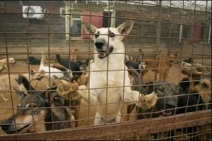 Юридическая защита прав животных