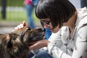 Консультация юриста по защите прав животных