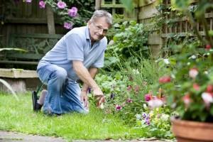 Юридическая онлайн консультация для садоводов