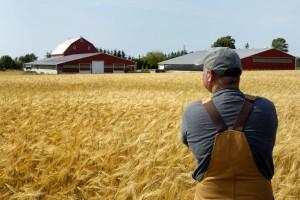Принятие в наследство крестьянсого фермерского хозяйства