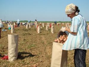 Как происходит наследование крестьянского фермерского хозяйства?